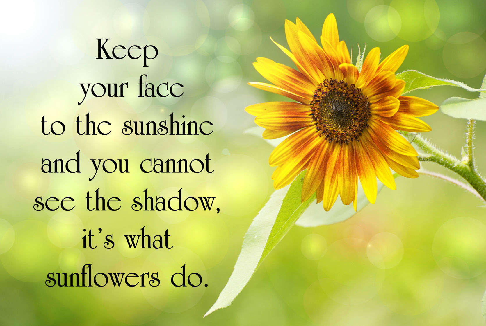 Keep your face to the sunshine and you cannon see the shadow, it's what sunflowers do.